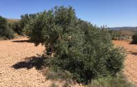 Filmplakat Baumaktion El Olivo